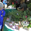 John Kline   The Goshen News<br /> Fern Gerber, of Goshen, examines a table full of plants during the annual Elkhart County Garden Expo at the Northern Indiana Event Center in Elkhart Saturday morning.