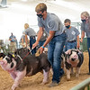 Drake Risser and his pig lead the other participants around the swine showroom Thursday during the 2020 4-H Showcase at the Elkhart County 4-H Fairgrounds in Goshen.
