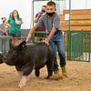 Kaden Yoder walks his pig around the swine showroom Thursday during the 2020 4-H Showcase at the Elkhart County 4-H Fairgrounds in Goshen.