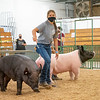Katherine Hartzell walks her pig around the swine showroom Thursday during the 2020 4-H Showcase at the Elkhart County 4-H Fairgrounds in Goshen.