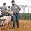 Brennan Mattern walks his pig around the swine showroom Thursday during the 2020 4-H Showcase at the Elkhart County 4-H Fairgrounds in Goshen.