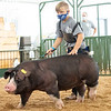 Tate Jones walks his pig around the swine showroom Thursday during the 2020 4-H Showcase at the Elkhart County 4-H Fairgrounds in Goshen.