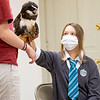 Malee Podell, 12, of New Carlisle, pets Silly Safaris owl Owlber during Saturday's Magical Me Day at West Park and Pavilion in Nappanee.