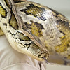 Silly Safaris Burmese python Magine rests on the lap of Silly Safaris Carly Chameleon during Saturday's Magical Me Day at West Park and Pavilion in Nappanee.