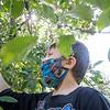 Joseph Hazen, 5, of Goshen, picks an apple Friday afternoon at Kercher Sunrise Orchard, located at 19498 County Road 38, Goshen.