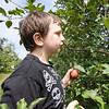 Tyler Hazen, 7, of Goshen, picks an apple Friday afternoon at Kercher Sunrise Orchard, located at 19498 County Road 38, Goshen.
