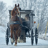 A horse and buggy trots along the 1,600 block of E.025 North Friday morning in LaGrange.