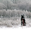 rOGER SCHNEIDER | The Goshen News<br /> A standing bear carving at the edge of a field at the Stutsman Farm along South Indiana Avenue added a bit of a surprise to passersbys Wednesday morning. The carving was surrounded by ice-covered vegetation that was created when fog froze as the temperature dipped to near zero.
