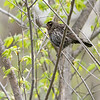 A bird is perched on a tree branch along the Shanklin-Mullet Trail Tuesday afternoon in Goshen.