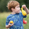 Greater Warsaw Cooperative Preschool student Field Burgan, 5, of Warsaw, picks a gourd Wednesday as part of their school field trip at Kercher Sunrise Orchards Inc. in Goshen.
