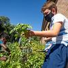 Manuchka Miller, left, and Abram Korenstra, harvest herbs from the garden Wed., Sept.1 at Bethany Christian Schools in Goshen.