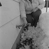 THE GOSHEN NEWS | 2-20-1985<br /> A sign of hope for winter-weary residents has popped through the earth at the home of Barbara Bainter, 57539 C.R. 27. New green shoots from daffodil bulbs have pushed through the snow to greet the February thaw.