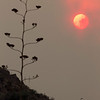 Arizona Wildfires.JPEG-0a29.JPG A Yucca plant is silhouetted as the sun glows red as it peeks through smoke and dust from the Horseshoe Two fire near Paradise and Portal, Ariz.  on Wedesday, June 8, 2011.   Several mountain communities have emptied in advance of the fire, and a utility that supplies power to customers in southern New Mexico and west Texas issued warnings of possible power interruptions.  (AP Photo/The Arizona Republic, Carlos Chavez)