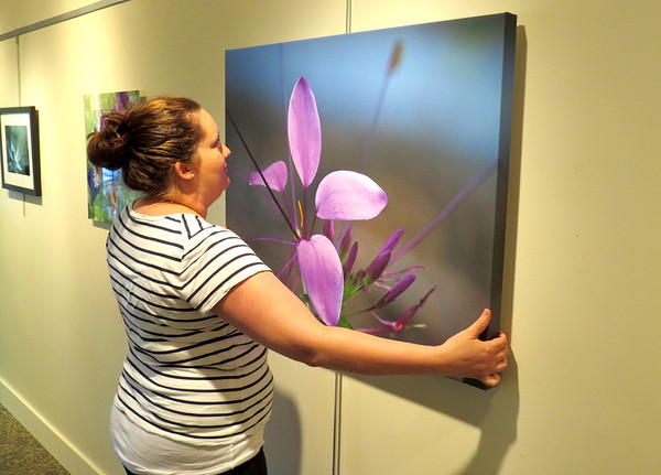 "Melissa Fanning hangs a photograph Thursday afternoon, Aug. 1, at the SullivanMunce Cultural Center. The photograph, Barry Lively's ""Cleome,"" is one of several new pieces on display at the center."