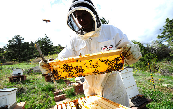 "Beekeeper Nick Gold opens a hive as he and beekeeper Peter Rountree repopulate their hives with newly purchased bees in Boulder Thursday afternoon April 19, 2012. <br /> For more photos and video of the beekeepers go to  <a href=""http://www.dailycamera.com"">http://www.dailycamera.com</a><br /> <br /> Photo by Paul Aiken   /  The Camera"