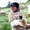 """Beekeeper Peter Rountree checks the condition of a new Queen Bee as they work to repopulate their hives in Boulder Thursday afternoon April 19, 2012. <br /> For more photos and video of the beekeepers go to  <a href=""""http://www.dailycamera.com"""">http://www.dailycamera.com</a><br /> <br /> Photo by Paul Aiken   /  The Camera"""