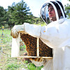 "Beekeeper Nick Gold prepares to open some newly purchased bees as he works to repopulate a series of hives in Boulder Thursday afternoon April 19, 2012. <br /> For more photos and video of the beekeepers go to  <a href=""http://www.dailycamera.com"">http://www.dailycamera.com</a><br /> <br /> Photo by Paul Aiken   /  The Camera"