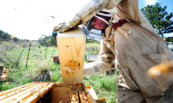 "Beekeeper Peter Rountree dumps new bees into a hive as he works to repopulate a series of hives in Boulder Thursday afternoon April 19, 2012. <br /> For more photos and video of the beekeepers go to  <a href=""http://www.dailycamera.com"">http://www.dailycamera.com</a><br /> <br /> Photo by Paul Aiken   /  The Camera"