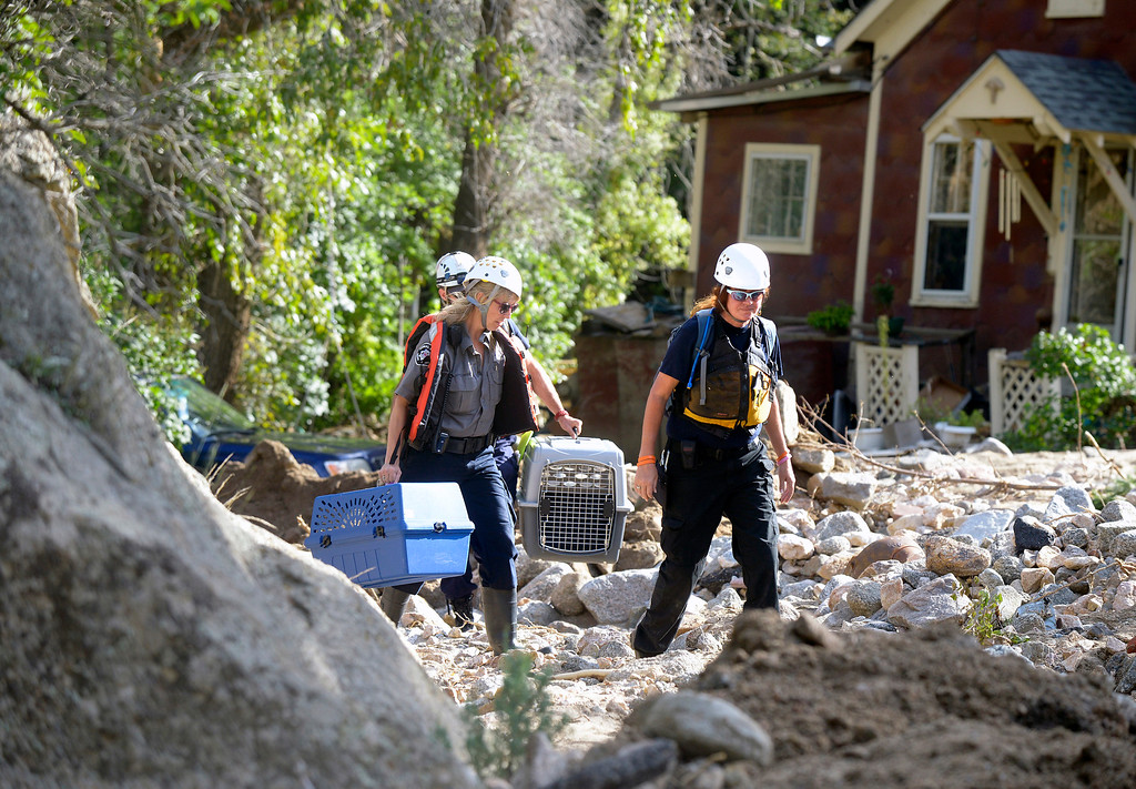 . A Boulder County Animal Control officer, and workers from the Humane Association work to rescue a cat from a destroyed home on Tuesday, Sept. 17, on Fourmile Canyon Drive in Boulder County.  Jeremy Papasso/ Camera
