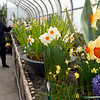 BEN GARVER — THE BERKSHIRE EAGLE<br /> Norma Haight and Eunice Agar explore the Bulb Show at the Berkshire Botanical Garden, Friday, March 15, 2019.<br /> The 2019 Bulb Show at the Berkshire Botanical Garden in Stockbridge is spectacular. This year, the garden has incorporated some South African bulbs in the show, resulting in a considerable variation in this tears offering in the Fitzpatrick Greenhouse.
