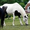 HORSEWORKS