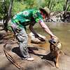"Burtha the dog brings back a branch for her  owner, Jon Dick.<br /> There were several visitors to Boulder Creek and Eben Fine Park on June 8, 2011, but few actually got in the water.<br /> For a video and more photos of the creek, go to  <a href=""http://www.dailycamera.com"">http://www.dailycamera.com</a>.<br /> Cliff Grassmick / June 8, 2011"
