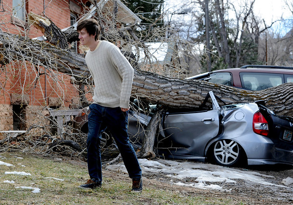 "Greg Rossin walks away from his crushed Honda Fit.<br /> Greg Rossin was called by roommates to come home to see his ""totaled"" car. High winds blew over this tree at 802 University.<br /> For a video of Rossin, go to  <a href=""http://www.dailycamera.com"">http://www.dailycamera.com</a>.<br /> Cliff Grassmick / February 22, 2012"