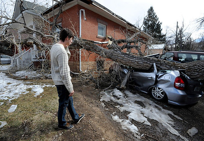 """Greg Rossin was called by roommates to come home to see his """"totaled"""" car. High winds blew over this tree at 802 University. For a video of Rossin, go to www.dailycamera.com. Cliff Grassmick / February 22, 2012"""