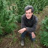 BEN GARVER — THE BERKSHIRE EAGLE  Ted Dobson, owner of Equinox Farm in Sheffield, Is working with Theory wellness to grow cannabis outdoors in Sheffield, Wednesday,  October 9, 2019.