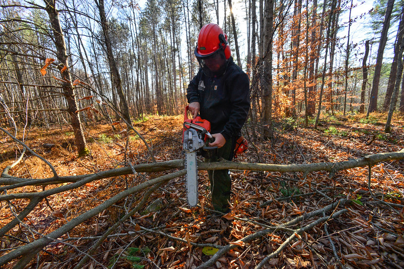 KRISTOPHER RADDER — BRATTLEBORO REFORMER<br /> Michael Young, a student at Windham Regional Career Center's Forestry Class, cuts up a tree into sections during training at the Brattleboro Watershed Forest on Wednesday, Nov. 6, 2019.