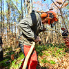 "KRISTOPHER RADDER — BRATTLEBORO REFORMER<br /> Austin Young, a student at Windham Regional Career Center's Forestry Class, maps out his angle of attack when cutting a ""spring"" tree during training at the Brattleboro Watershed Forest on Wednesday, Nov. 6, 2019."