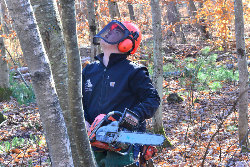 KRISTOPHER RADDER — BRATTLEBORO REFORMER<br /> Students from Windham Regional Career Center's Forestry Class work on their skills with a chainsaw at the Brattleboro Watershed Forest on Wednesday, Nov. 6, 2019.