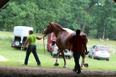 Clare County Fair Draft Horse Class