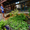 KRISTOPHER RADDER — BRATTLEBORO REFORMER<br /> Stephanie Bonin, with Downtown Brattleboro Alliance,  waters some of the flowers.
