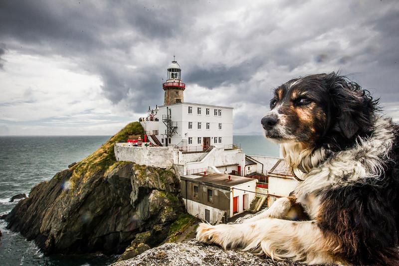 PHOTO OLIVIER PONTBRIAND LA PRESSE. IRLANDE - Dans cette photo: Un chien monte la garde pres d'un Phare tout pres de la ville de Dublin ou la compagnie Decision D4H s'est installé.<br /> -30-  Référence #   Section: LPA