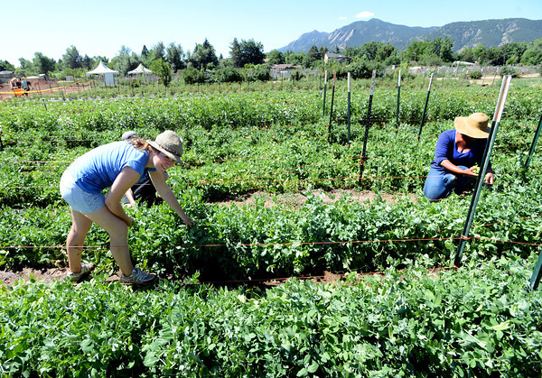Cultiva and Growing Gardens