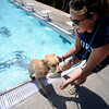 "Emma Pucci gives Callie a hand up and out of the water during Dog Dayz at Scott Carpenter Pool in Boulder<br /> on Friday, September 9, 2011. FOR MORE PHOTOS AND A VIDEO FROM DOG DAYZ GO TO  <a href=""http://WWW.DAILYCAMERA.COM"">http://WWW.DAILYCAMERA.COM</a><br /> Photo by Paul Aiken / The Camera / September 6 2011"