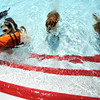 "The shallow end of the pool is crowed during Dog Dayz at Scott Carpenter Pool in Boulder<br /> on Friday, September 9, 2011. FOR MORE PHOTOS AND A VIDEO FROM DOG DAYZ GO TO  <a href=""http://WWW.DAILYCAMERA.COM"">http://WWW.DAILYCAMERA.COM</a><br /> Photo by Paul Aiken / The Camera / September 6 2011"