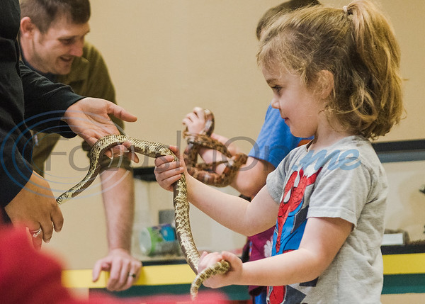 Four-year-old Charlotte Platt holds a snake in an animal exhibition during Darwin Day at Discovery Science Place Saturday, Feb. 16, 2020, in Tyler.