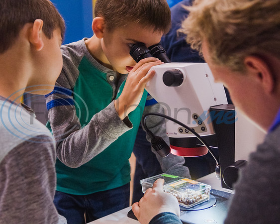Nine-year-old Sam Martin (center) looks at fungus garden ants through a microscope as his brother Colton Martin, 7, (left) and University of Texas at Tyler graduate student Kat Beigel look on during Darwin Day at Discovery Science Place Saturday, Feb. 16, 2020, in Tyler.