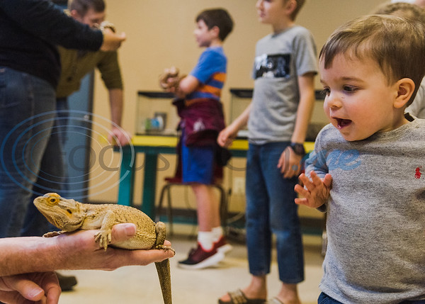 Richard Ott, recently retired fisheries biologist with Texas Parks and Wildlife, (left) holds his bearded dragon, Sydney, as 18-month-old William Giddens reacts in awe after petting its head in an animal exhibition during Darwin Day at Discovery Science Place Saturday, Feb. 16, 2020, in Tyler.