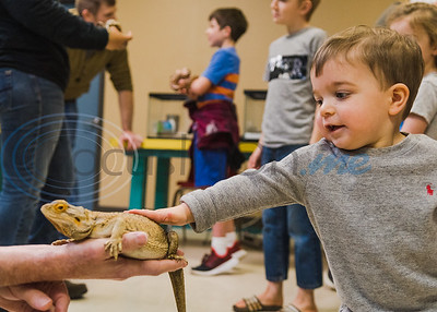 Richard Ott, recently retired fisheries biologist with Texas Parks and Wildlife, (left) holds his bearded dragon, Sydney, as 18-month-old William Giddens reaches out to pet its head in an animal exhibition during Darwin Day at Discovery Science Place Saturday, Feb. 16, 2020, in Tyler.