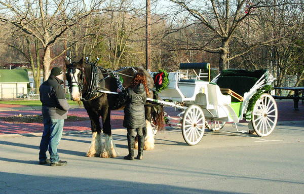 Jennifer Wright of Blue River Carriage Company, Morristown, prepares Solomon for carriage rides on Ladies Night in Zionsville Thursday, Dec. 11. Thomas Wright keeps the handsome Shire, a draught horse breed, still while Jennifer completes preparations.