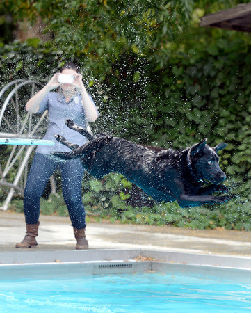 "Brittany Moore takes a photograph of Norman the dog jumping off the diving board during Dog Dayz at Scott Carpenter Pool on Monday, Sept. 17, in Boulder. For more photos and video of Dog Dayz go to  <a href=""http://www.dailycamera.com"">http://www.dailycamera.com</a><br /> Jeremy Papasso/ Camera"