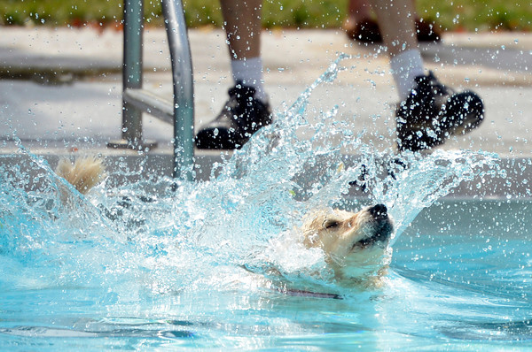 "Kallie the golden retriever jumps into the pool during Dog Dayz at Scott Carpenter Pool on Monday, Sept. 17, in Boulder. For more photos and video of Dog Dayz go to  <a href=""http://www.dailycamera.com"">http://www.dailycamera.com</a><br /> Jeremy Papasso/ Camera"
