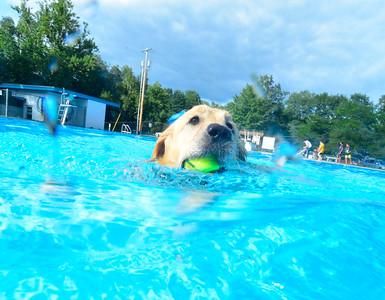Dog days of Summer - 082018