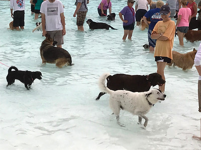 Dog paddles raises funds through fun