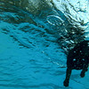 KRISTOPHER RADDER — BRATTLEBORO REFORMER<br /> Samson swims in the deep end of the pool during the  2nd annual Doggie Plunge at Living Memorial Park, in Brattleboro, on Monday, Aug. 19, 2019.