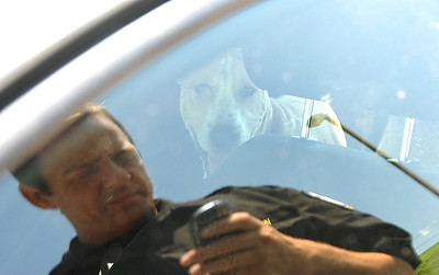 Dogs Locked in Car