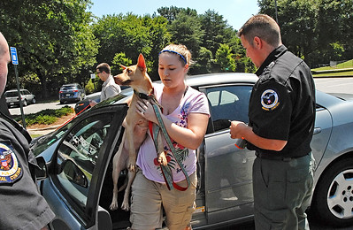 08-10-11  --dogs locked in 07--  The owners remove their dogs from their locked car which was reading a temperature range of 102-120 degrees. STAFF/LAURA MOON.